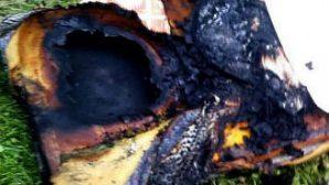 В Минске на Одинцова из пожара спасли троих