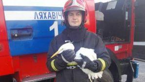 """Операция """"Цапля"""" - в Брестской области сотрудники МЧС выезжали на спасение раненого пернатого"""