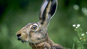 """На Гродненщине задержали браконьеров, устроивших """"ночное сафари"""" на зайцев"""