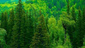 В Беларуси создадут леса будущего