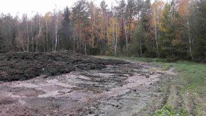 На Минщине лес залило навозной жижей