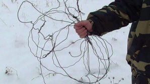 В Поставском районе задержали браконьера, добывавшего дичь с помощью удавок