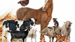 Аналитики подсчитали мясо, молоко и яйца, которые произвели сельскохозяйственные организации Беларуси