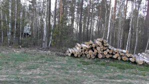 В Минской области расхитители леса попали в засаду