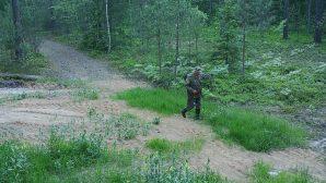 В Березинском районе браконьера выследили по фотоловушкам