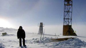 В Антарктиде обнаружили загадочные мертвые организмы