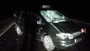 На трассе М11 произошла смертельная авария с 52-летним пешеходом