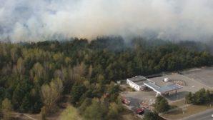 Сотрудники МЧС РБ ликвидировали возгорание леса на окраине Бреста