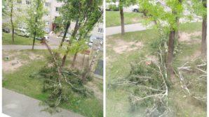 Витебск и Гродно пострадали от бушующей непогоды