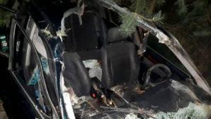 Двойная авария в Барановичском районе произошла по вине лося