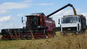 В Могилевской области 8 районов завершили уборку зерновых и зернобобовых культур