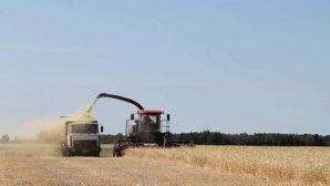 Урожай-2017: осталось убрать менее 5% площадей зерновых