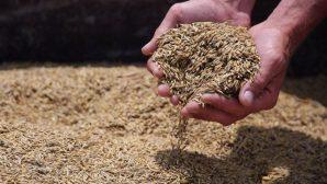 Витебская область: на 20.09.2017 убрано 96,5% зернового клина