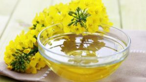 В Беларуси наращивается производство рапсового масла