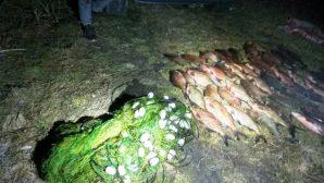 В Столинском районе задержали браконьеров с полной сетью лещей