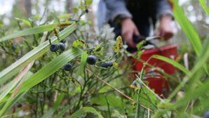 Могилевские спасатели нашли потерявшегося в лесу инвалида