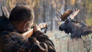Сезон трофейной охоты открылся в Беларуси