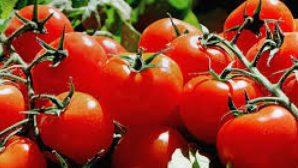 Столинские фермеры грозят выбросить урожай томатов на свалку